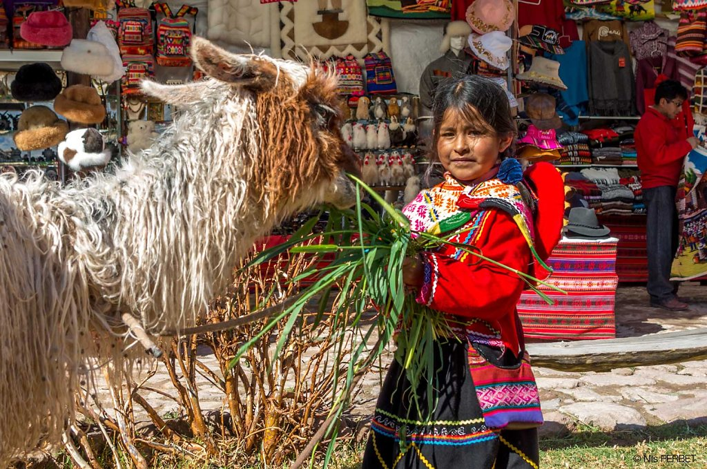 Young Peru girl feeding a llama